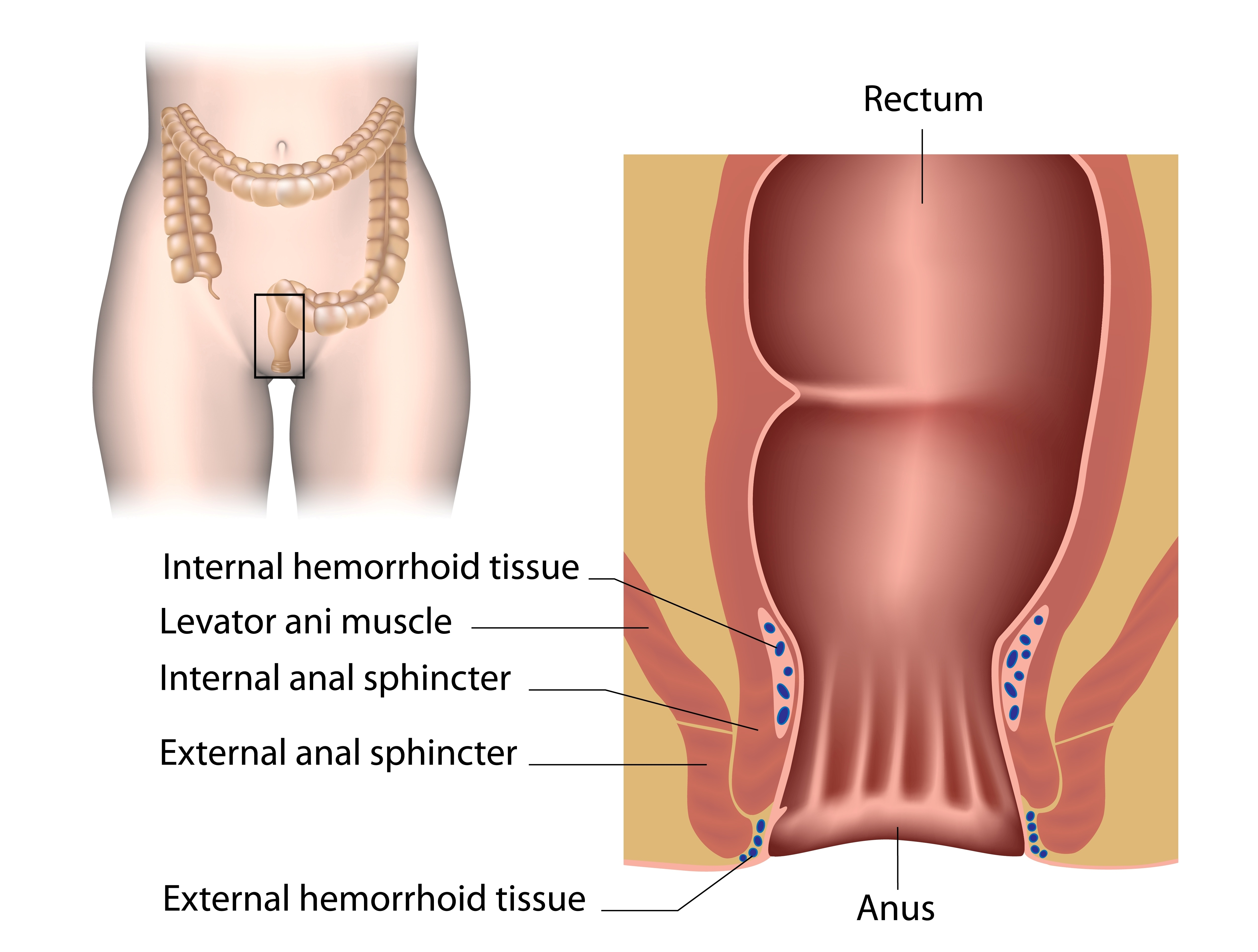 anus injury lower back in nerves
